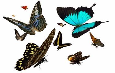 ButterflysAreFree