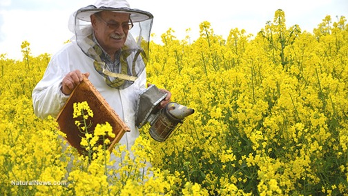MonsantoBees