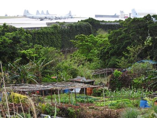 OkinawaContamination